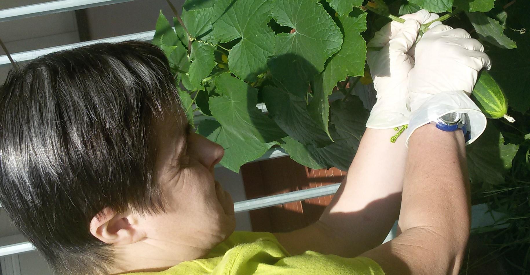 Coltivare un giardino non significa nutrire solo il corpo, ma anche l'anima